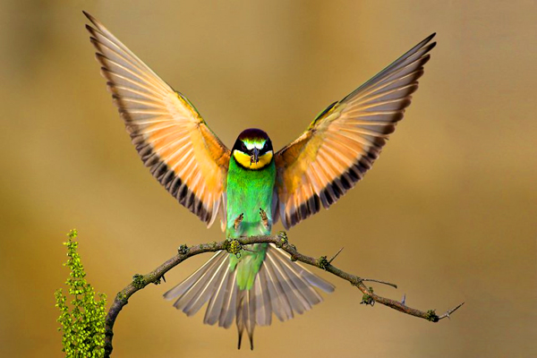 Beautiful-Birds-1